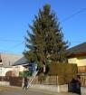 Karácsonyfa állítás (2013)-1