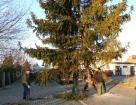 Karácsonyfa állítás (2013)-20