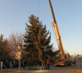Karácsonyfa állítás (2013)-22